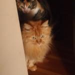 女子猫2匹、飼い主の頭がイッちゃったんじゃないかと心配中。